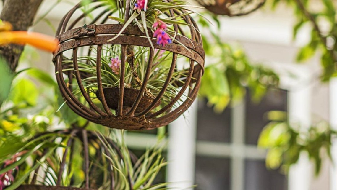 Air Plant Display Ideas Better Homes Gardens