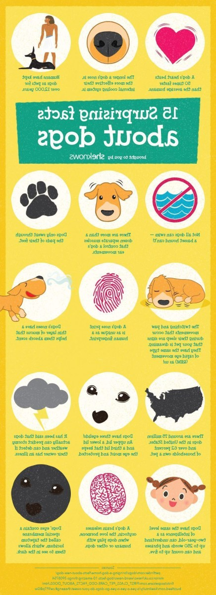 Amazing Dog Facts That Will Make You Love Your Pup Even