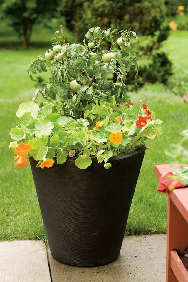 Beautiful Container Gardening Ideas With Images Tomato