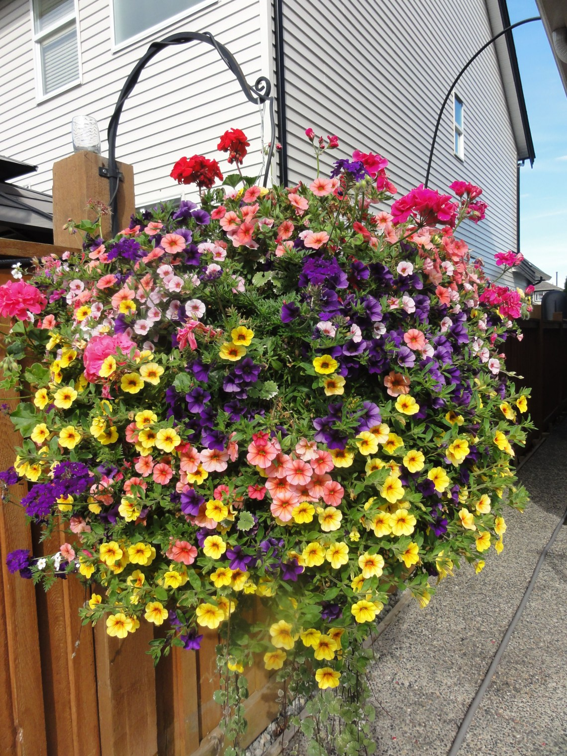 Beautiful West Coast Special Full Sun Basket With