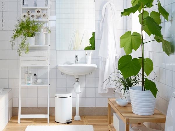 Best Plants For Bathrooms 20 Indoor Plants For The Bathroom
