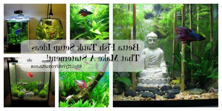 Betta Fish Tank Setup Ideas That Make A Statement