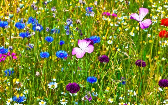 Easy Ideas 50 Quick Fixes For The Garden This Spring