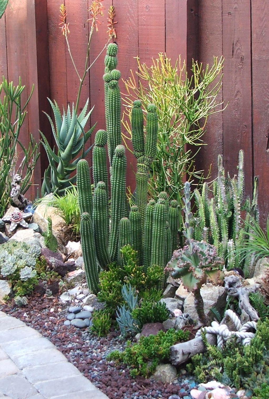 Fabulous Cactus Garden Landscape Idea For Side Home Garden