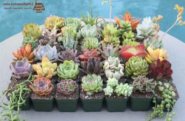 Facts About Succulent Plants And Succulent Care Flower