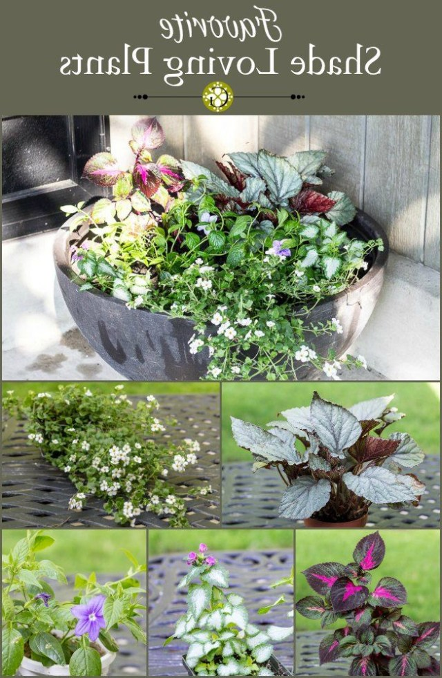 Favorite Shade Loving Plants For The Front Porch Porch