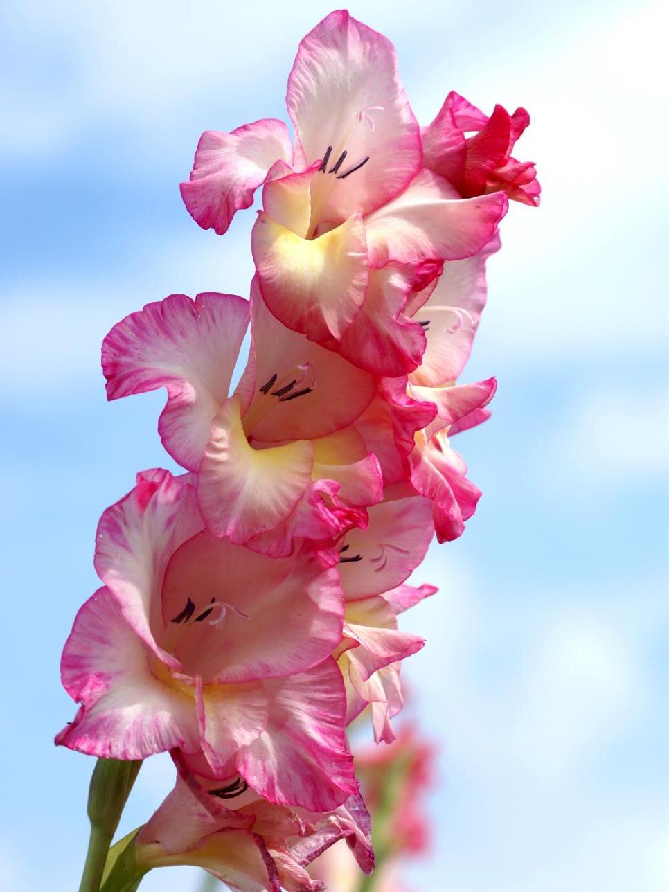 Flowering Bulbs Planted In Spring Diy
