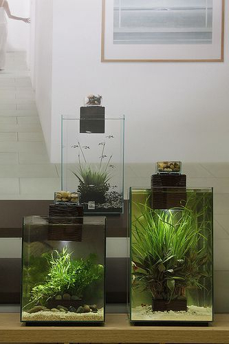 Fluval Chi 19 And 25 Litre George Farmer On Flickr