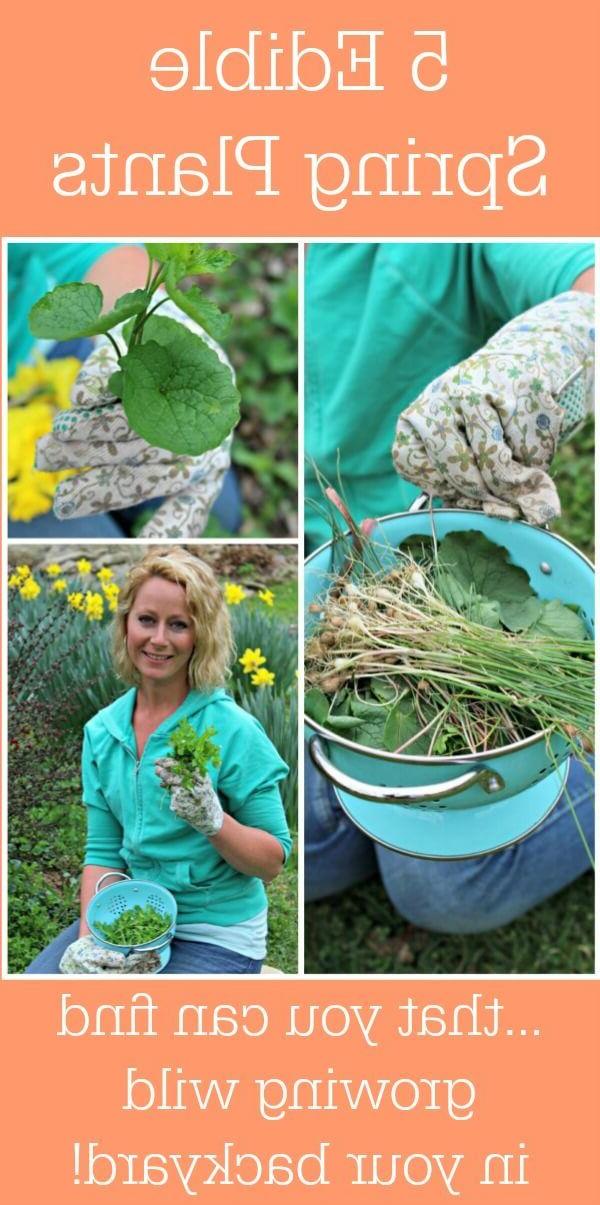 Gardening Tips Gardening Things