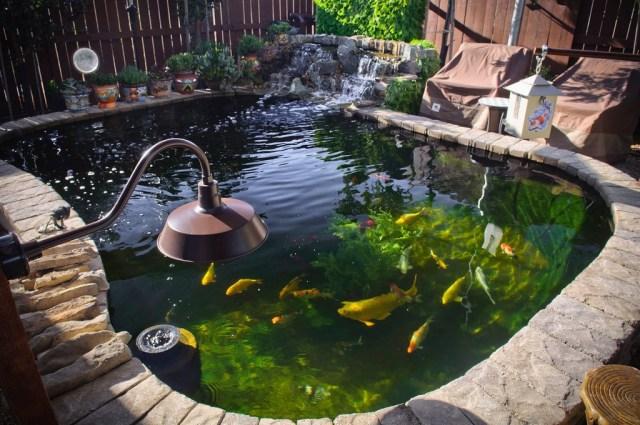 How I Built A 4000 Gallon Koi Pond Diy Fishpond