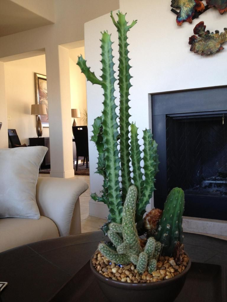 Indoor Cactus Images Indoor Cactus Indoor Cactus