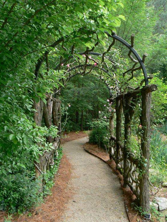 Living Willow Tunnel For Garden And Backyard Everything