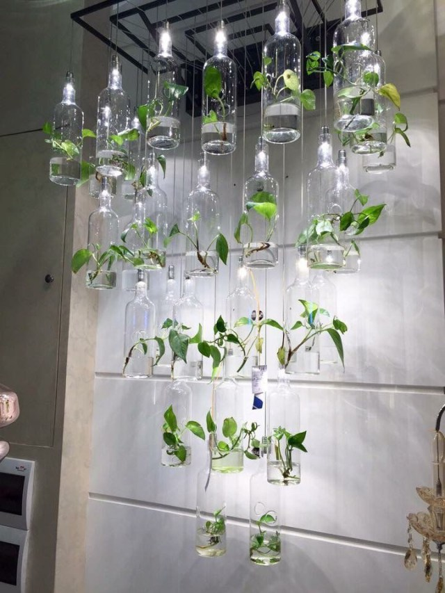 Pin Betool Saeed On Grow With Images House Plants