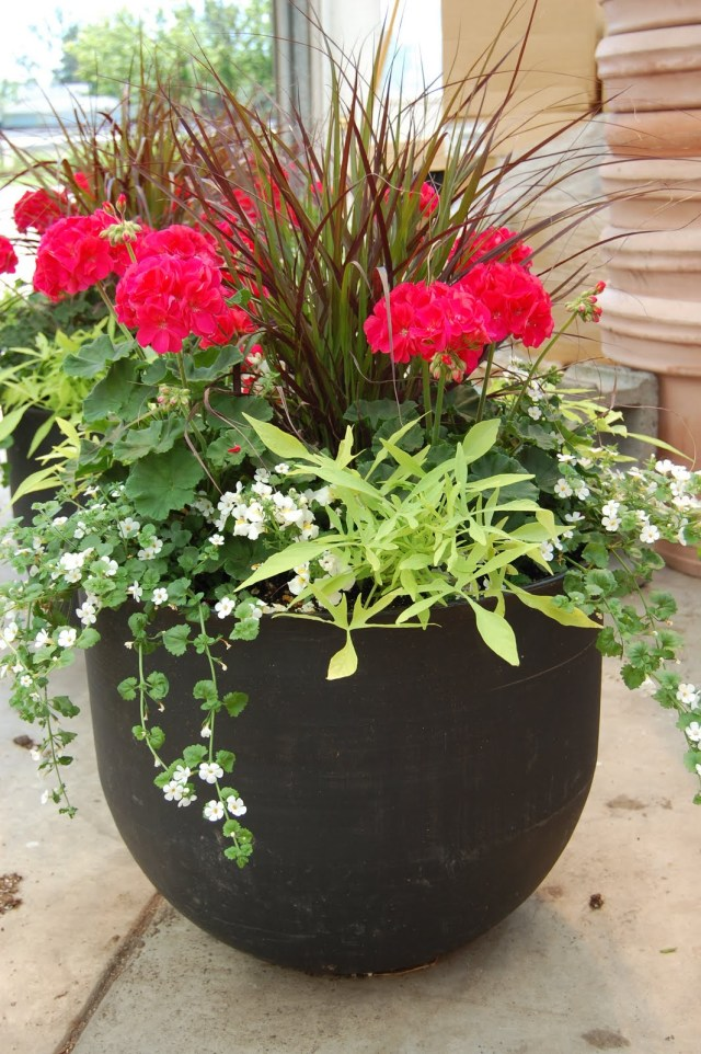Schaefer Greenhouses How To Plant A Patio Pot Container