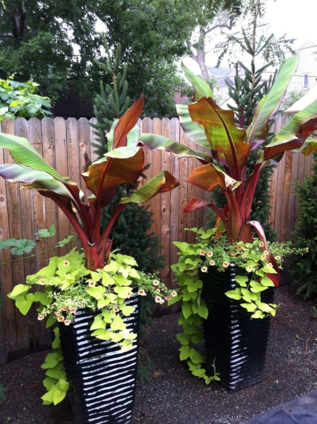 Small Front Yard Tropical Landscaping Ideas Small Front