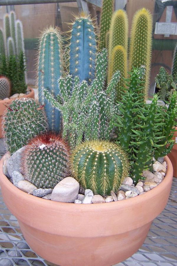 Succulent Pot Ideas Succulent Garden Ideas