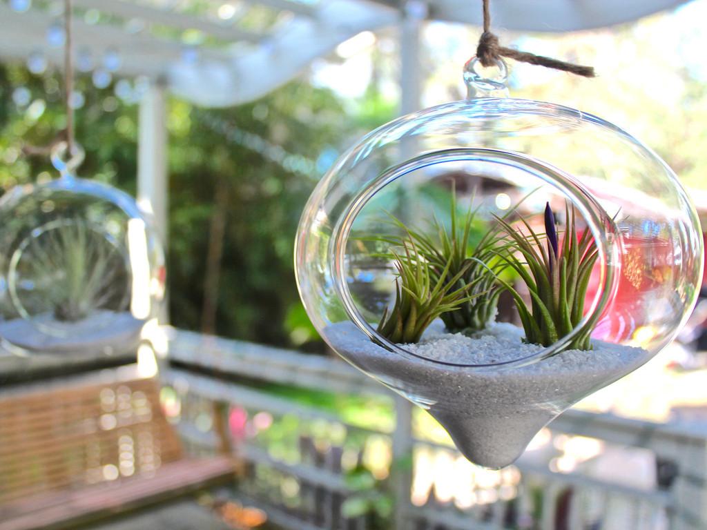 Indoor Hanging Plant Baskets