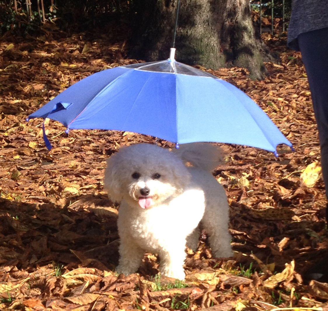 Comfortable Pet Umbrella Home Designing