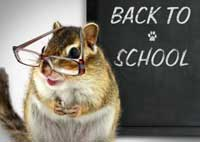 Back to school on chalkboard with chipmunk