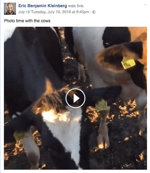 FB Live - Photo Time With the Cows - Homefarm Life