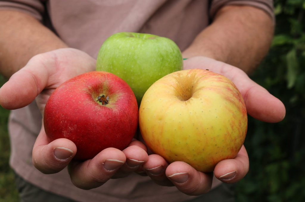 Favorite Apple Recipes for Fall
