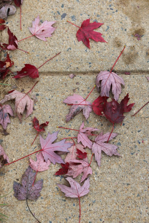 Signs of Fall-9771