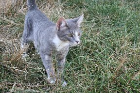 Pierre as a kitten