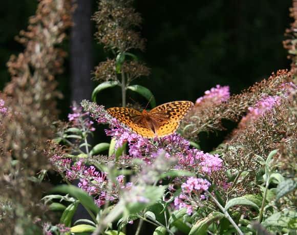 Three Native Perennials For Southern Gardens