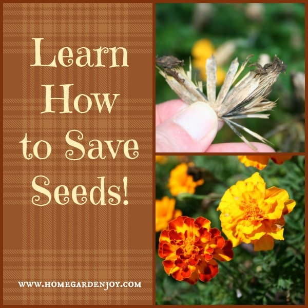 learn how to save garden seeds