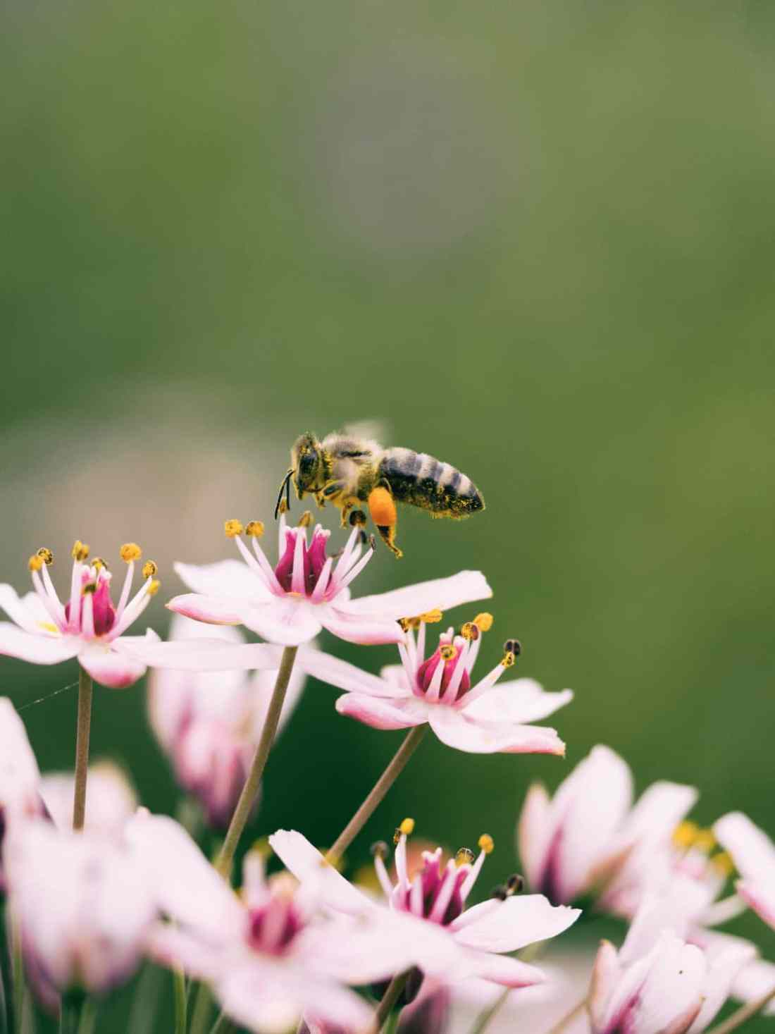 a picture of a wasp on a pink flower