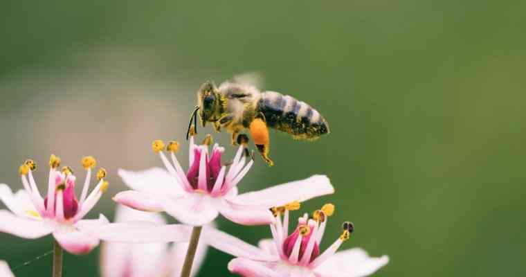 Pollinating Insects, Moths and Butterflies