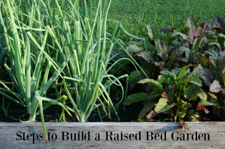 steps to build a raised bed garden