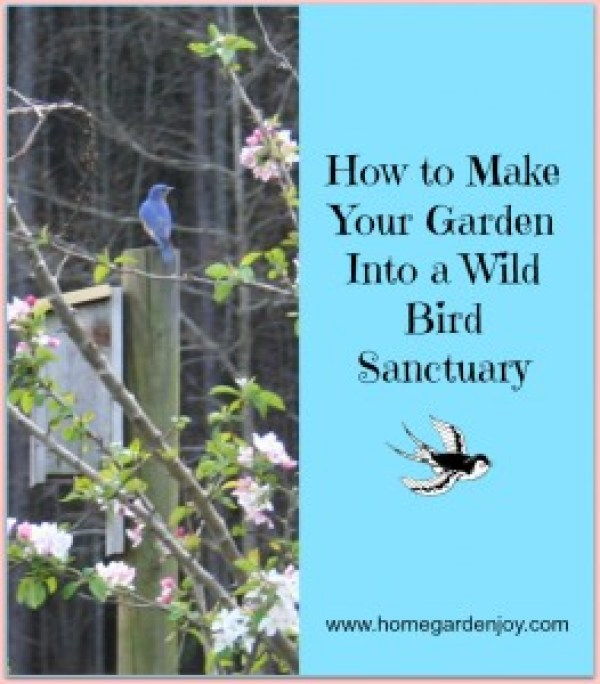 attract wild birds