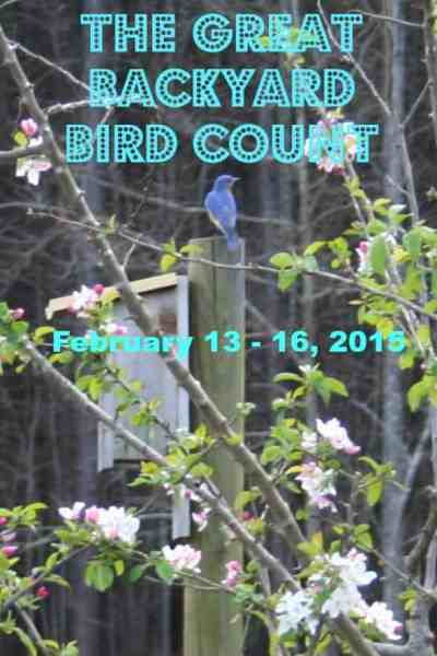 backyard bird count