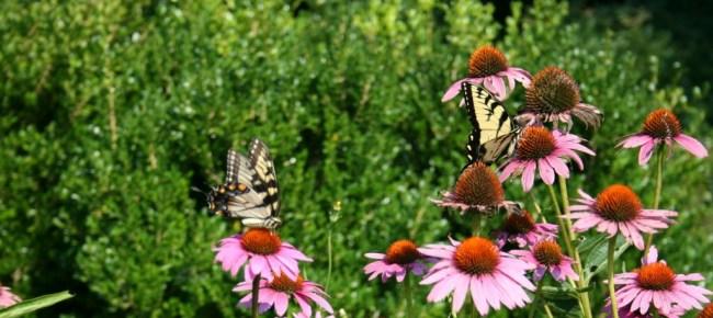 FB cover butterflies