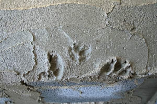 Rocky's paw prints