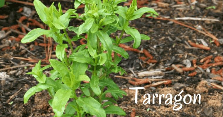 Healthy Recipes:  Tarragon Chicken Salad