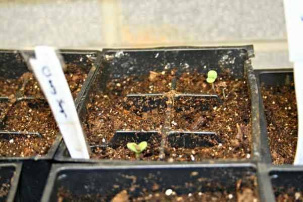 seed starting update