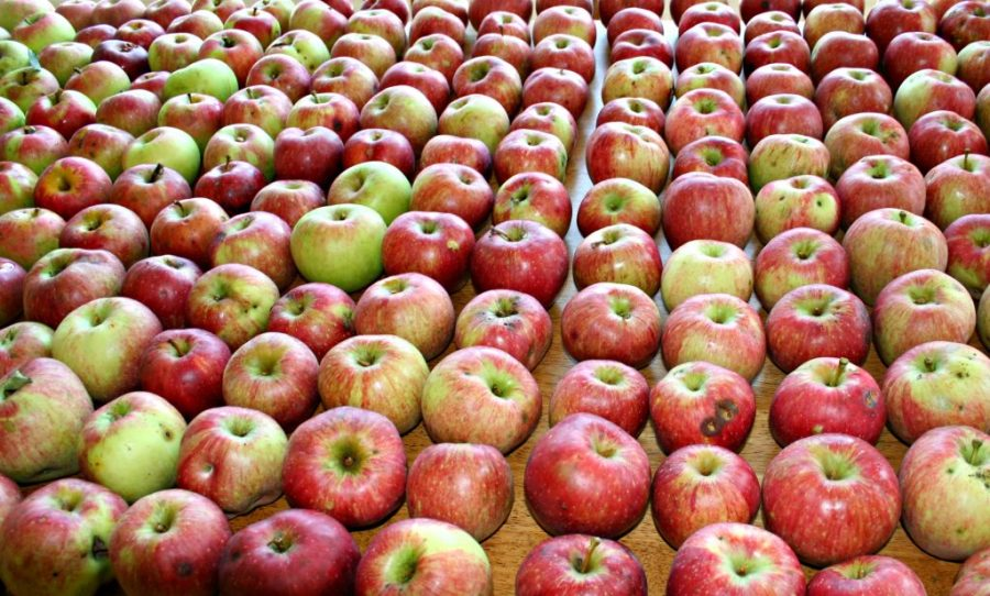 how to can apples