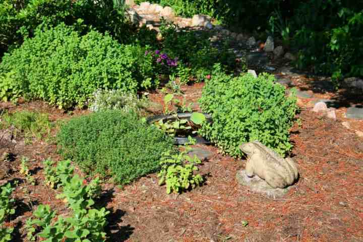 a picture of an herb garden