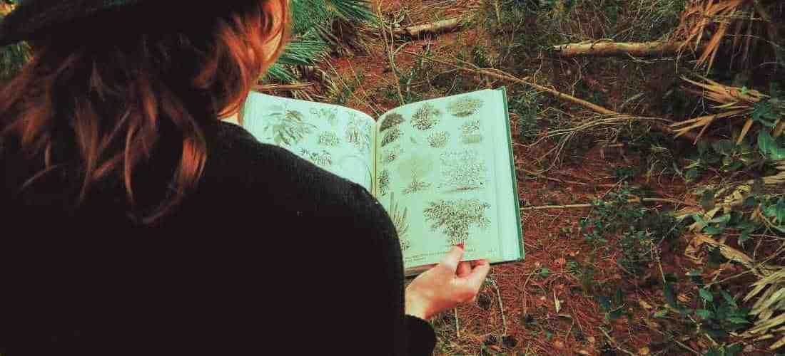 How to Understand Scientific Names of Plants