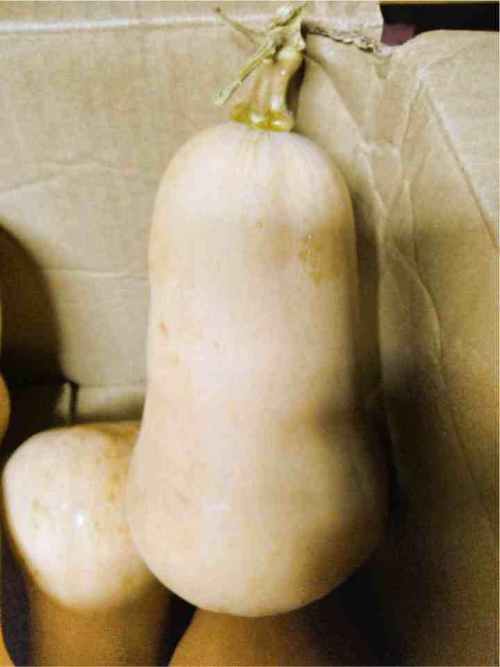 butternut squash from the garden