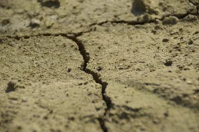sandy soil type