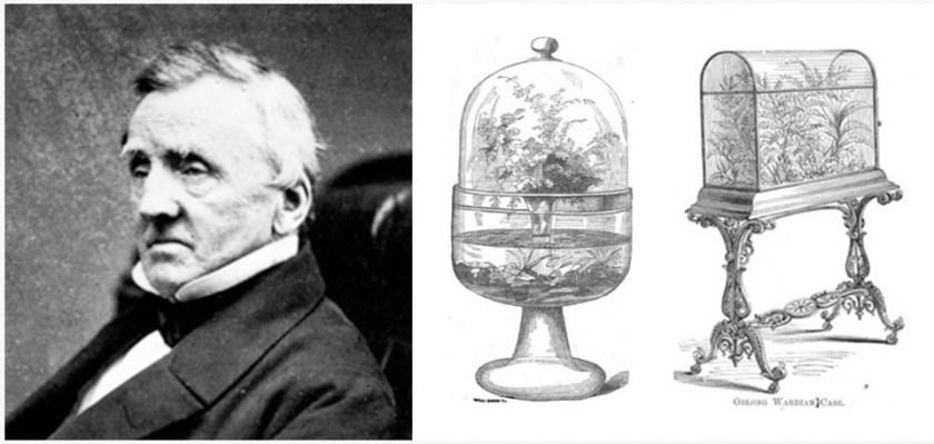 Nghệ thuật Terrarium được khới phát bởi Nathaniel Bagshaw Ward 1827