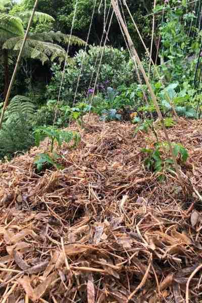 Deep Mulching- The Fuss Free Gardening Style