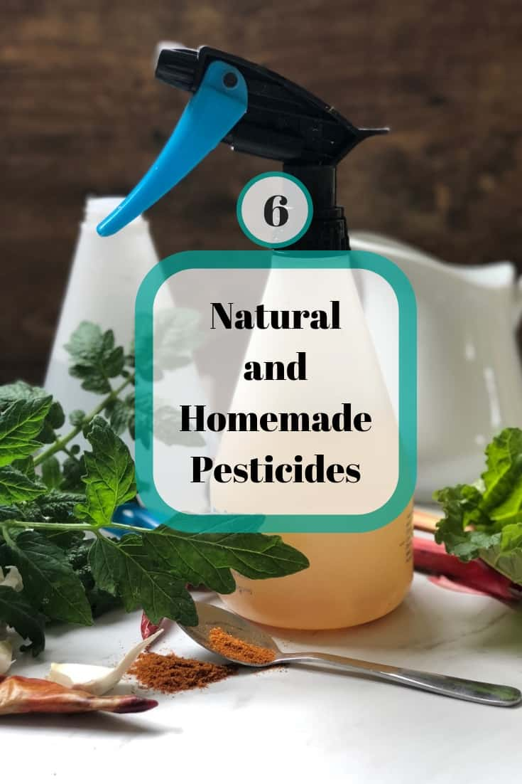 6 Natural D.I.Y Pesticides and Fungicides