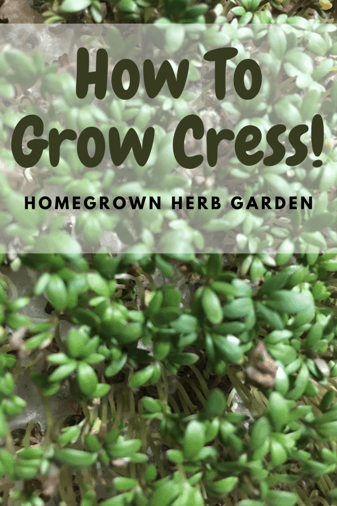 growing cress is easy