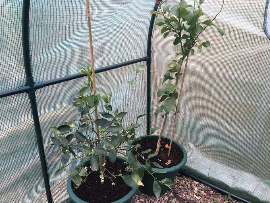 greenhouses are amazing resource