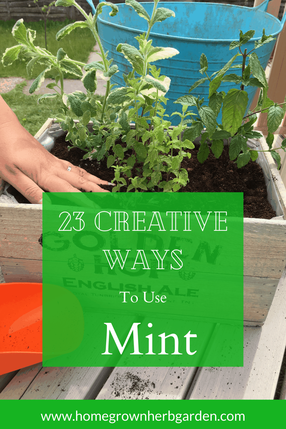 creative uses for mint
