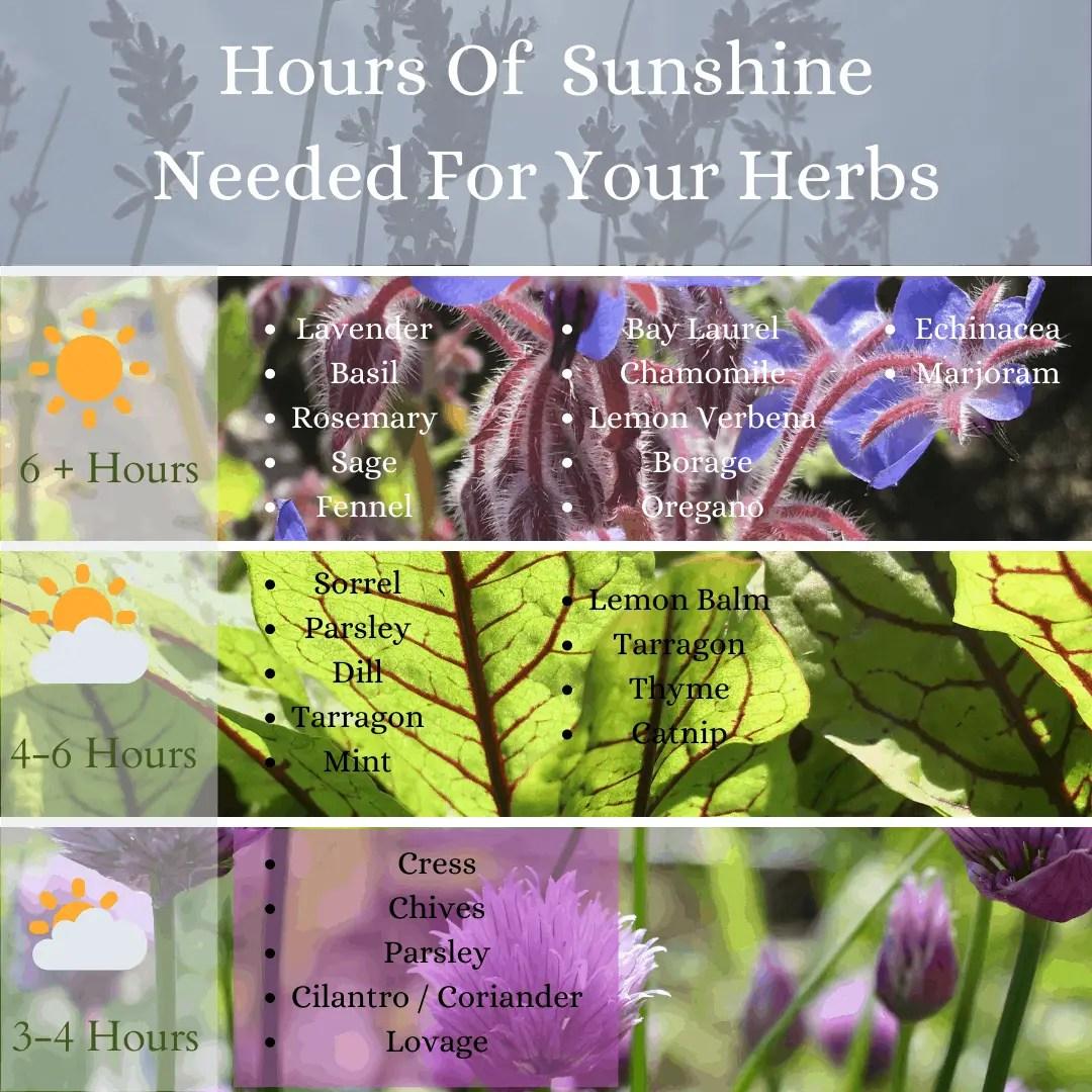 Sunshine hours needed for herbs